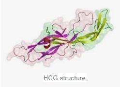 beta hcg structure