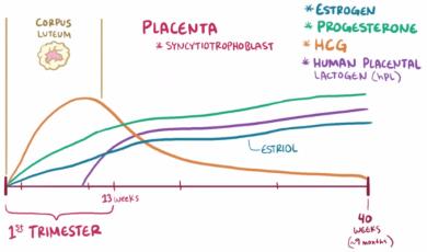 le dosage le taux des Beta hCG l'unité en mIU/mL