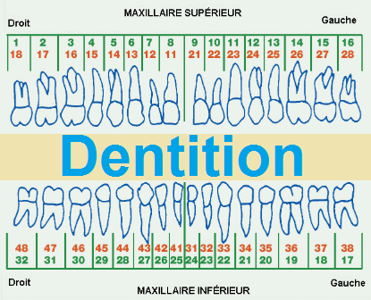 Dentition de lait POUSSEE DENTAIRE