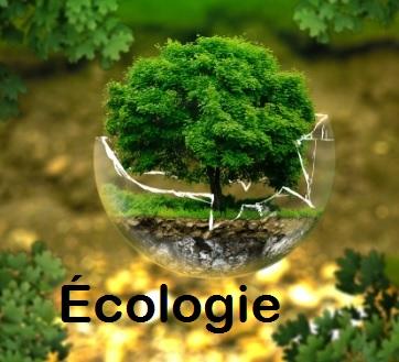 ÉCOTOXICOLOGIE : effet serre  ozone Uv ENVIRONNEMENT ET MALADIES