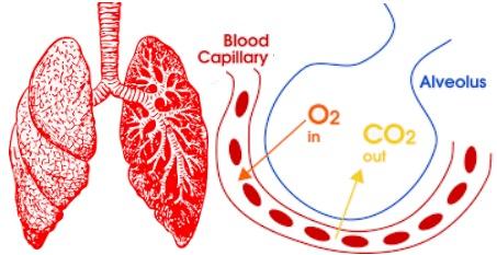 Étiologie de l'insuffisance respiratoire