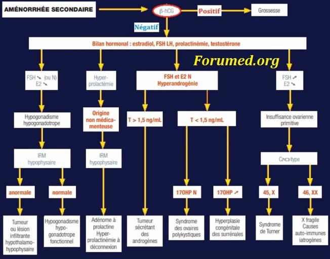 Démarche Diagnostique devant l'Absence de règles Chez la femme Bilan FSH LH œstrogène Testostérone Prolactine