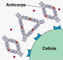 Le syndrome des anti-phospholipides (SAPL)