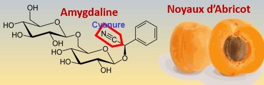Vitamine B17 Amygdaline et Cyanure
